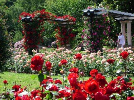 Mondial des Roses