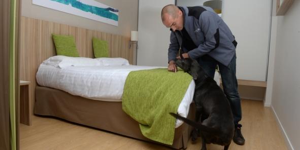 le chien le meilleur ennemi des punaises de lit. Black Bedroom Furniture Sets. Home Design Ideas