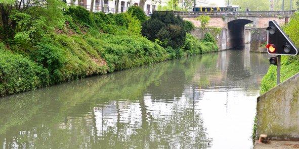 6 millions d'euros seront investis pour tenter de sauver les platanes des berges du Canal du Midi