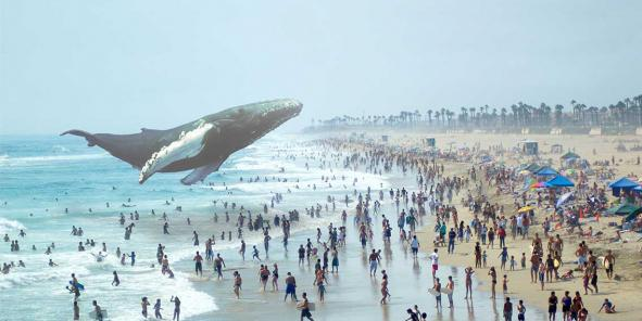 Sur son site, Magic Leap présente quelques images de réalité augmentée, dont une baleine flottant au-dessus d'une plage bondée.