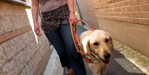 Composé de trois comités scientifiques bénévoles, la fondation Visio s'est structurée pour intervenir sur trois domaines: la recherche ophtalmologique, des techniques d'amélioration de la sélection des chiens guides d'aveugles, l'informatique et l'électronique au service des déficients visuels.