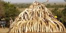 La Chine interdit le commerce d'ivoire d'ici 2017