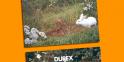 Les publicités Durex et les années Sida
