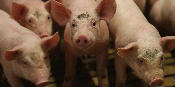 Le fonds transitoire pour soutenir les éleveurs de porc a été validé par l'Autorité de la concurrence.