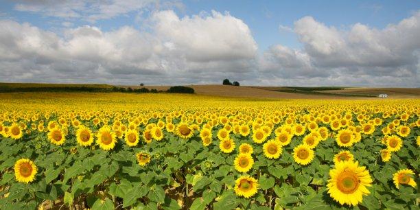 En Occitanie, 14 000 exploitations regroupent un million d'hectares de grandes cultures.