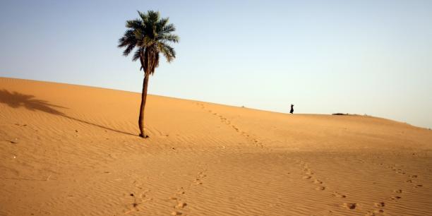 L'objectif est d'endiguer l'expansion du Sahara, de réhabiliter 50 millions d'hectares de terres et de réduire la production de CO2. La nouvelle forêt devrait en effet absorber près de 250 millions de tonnes de dioxyde de carbone.