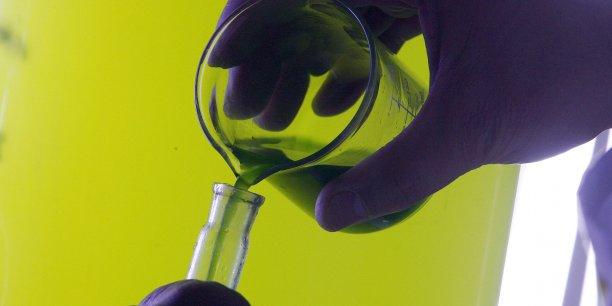 """""""Tout ce qui vient de la production d'algues est trop souvent négligé par l'industrie pharmaceutique, alors qu'il s'agit d'un secteur d'avenir"""", regrette Pierre-Olivier Goineau, président de France Biotech."""