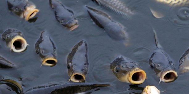 Les populations les plus touchées sont celles d'eau douce. Or, 10% des espèces connues sur le globe vivent dans ce milieu, qui ne couvre pourtant que 0,8% de la surface terrestre.