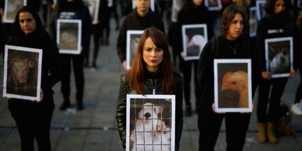 Des militants des droits des animaux manifestent à Igualdad (Espagne) pour protester contre les mauvais traitements infligés aux animaux lors de la Journée internationale des droits des animaux, le 10 décembre 2016.