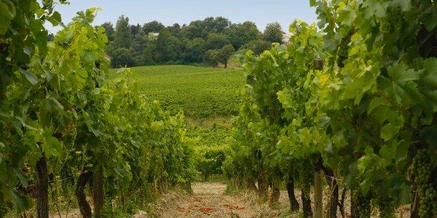 Vue sur les vignes du Château Moya (DR)