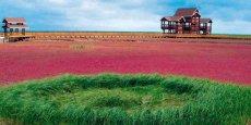 La réhabilitation d'une zone littorale de 300 000 ha, abritant la plus grande roselière du monde, est l'un des contrats majeurs de Biotope en Chine.