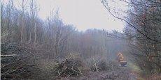 Avec les quelque 80 millions d'arbres plantés chaque année actuellement, contre 130 millions en 1990, la quantité de bois produite dans quinze ans sera divisée par deux, estime Tancrède Neveu.