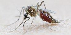 Une soixantaine de pays sont touchés par le virus Zika, selon l'OMS.