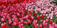 """""""Pour assurer cette confidentialité parfaite, nous avons décidé de donner un autre nom (à l'opération), """"Tulipe"""", afin de ne jamais prononcer le nom Google"""", a poursuivi Eliane Houlette, chef du parquet national financier (PNF)."""