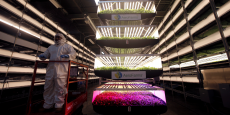 Tous les légumes qui poussent dans les fermes d'Aerofarms sont vendus dans le quartier et ses alentours afin de privilégier un circuit court.