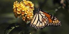 Il existe plus de 20.000 espèces de pollinisateurs, qu'ils soient sauvages comme les papillons et les bourdons, ou domestiques, comme l'abeille d'Europe.