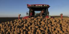 Le prix de la pomme de terre a augmenté de 37%, selon Familles rurales, plus forte hausse parmi les produits comparés.