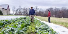 D'ici la fin de l'année, l'Agence Bio estime que les terres consacrées au mode de production bio dépasseront la barre des 1,5 million d'hectares, soit plus de 5,8% de la Surface agricole utile (SAU).