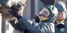 Des agents se transmettent un canard destiné à être abattu à Latrille, dans les Landes, le 6 janvier 2017.