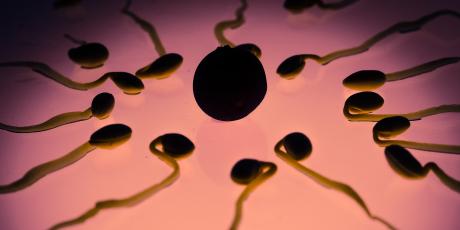Photo d'illustration pour dons de sperme, spermatozoïde, fécondation in vitro