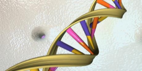 Grimaud a la croissance dans les gènes