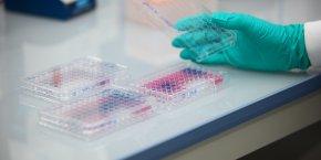 La recherche sur les bactéries est devenue un enjeu mondial