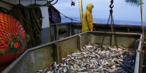 pêche, océan, produit, maritime, côtes, chalutier, filet, poisson, Boulogne-sur-Mer,