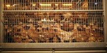 Paris peut débloquer 15 millions d'aides pour la filière volaille