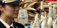 La Chine détruit six tonnes d'ivoire en public, une première