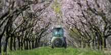 Greenpeace traque les OGM et les pesticides dans les assiettes