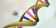 Fin de la collecte d'ADN dans un lycée de La Rochelle