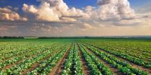 Alimentaire : rester compétitif dans un paysage changeant
