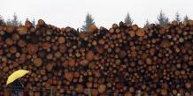 """""""Nous souhaitions montrer qu'il n'y a pas que le papier à prendre en compte"""" en ce qui concerne """"l'impact de notre consommation sur les forêts, principale cause de la déforestation mondiale"""", expliquent les responsables de l'ONG."""