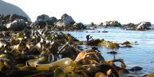 Breizh algae tour : un colloque sur les algues et la nutrition