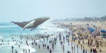 Réalité augmentée par Magic Leap : Baleine flottante