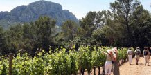 vignes buissonnières