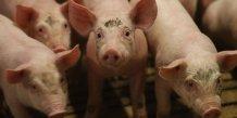 Stephane le foll espere des avancees en europe sur la crise porcine