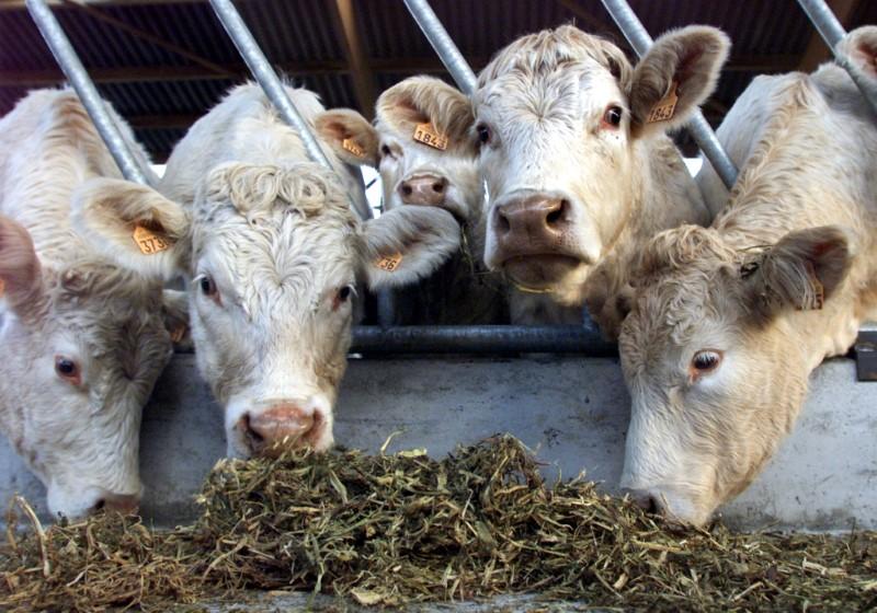 Combien de fermes de 1.000 vaches pour nourrir les Français ?