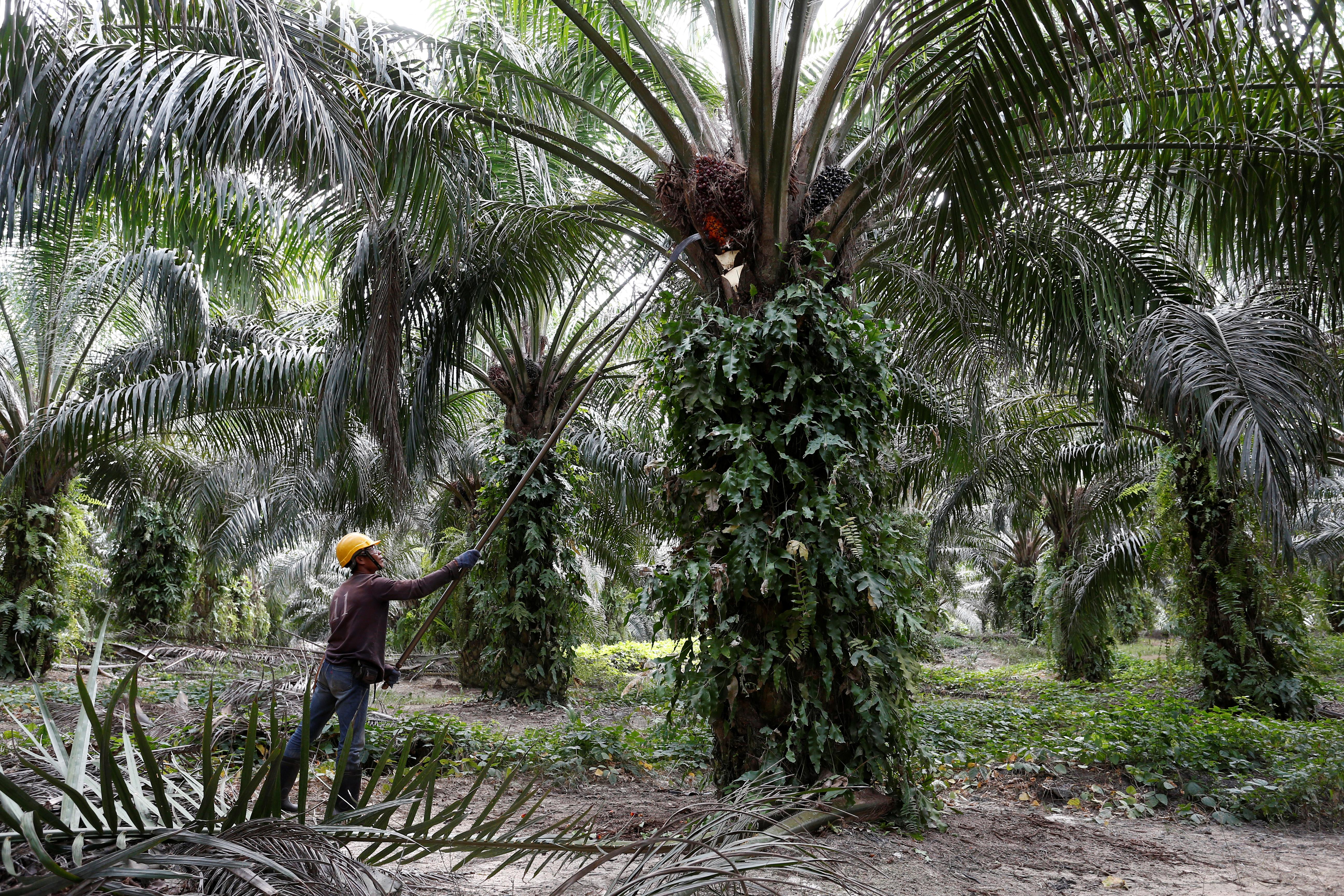 Les députés font marche arrière et excluent l'huile de palme de la liste des biocarburants