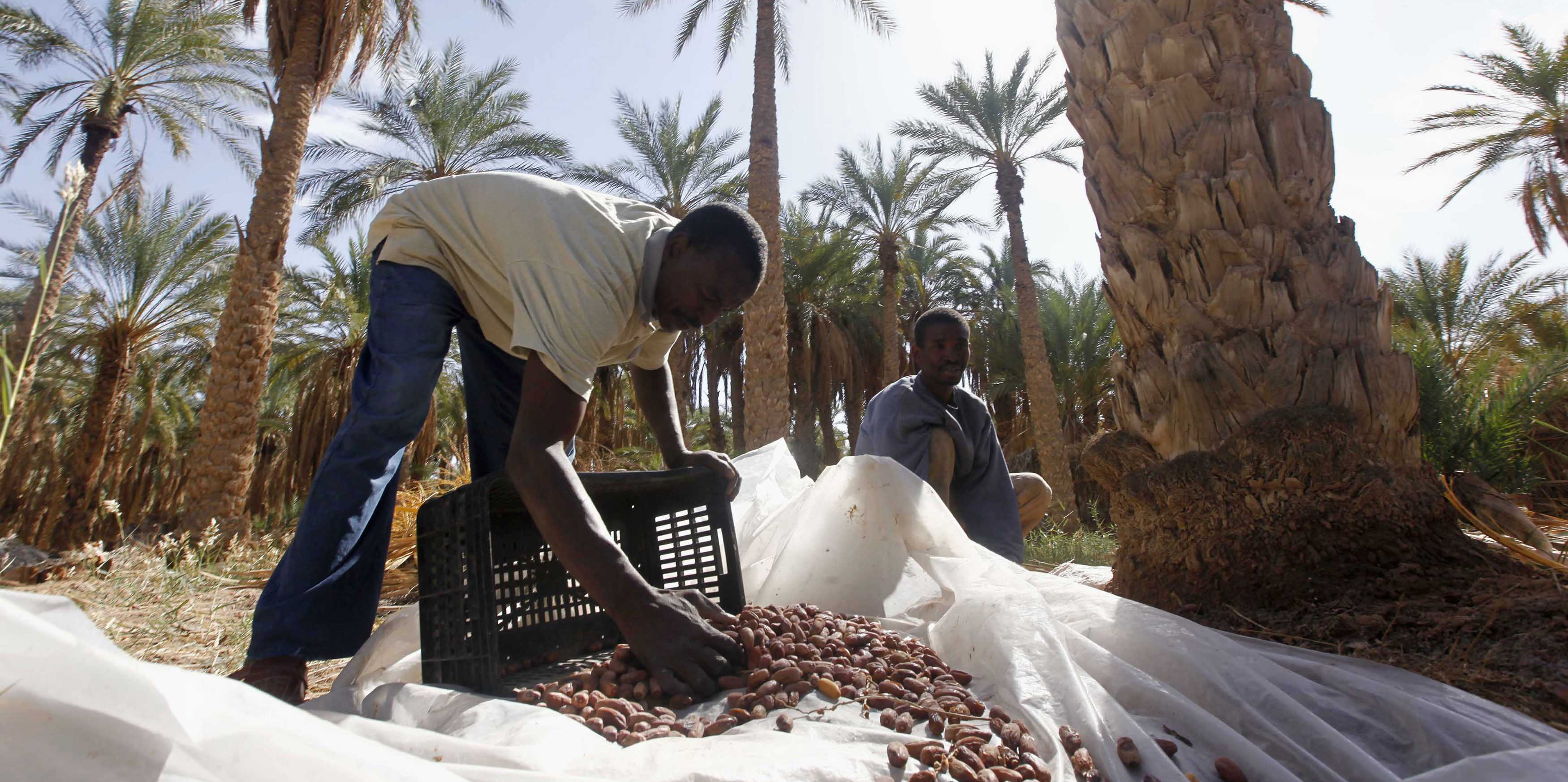 """Résultat de recherche d'images pour """"dattes mauritanie"""""""