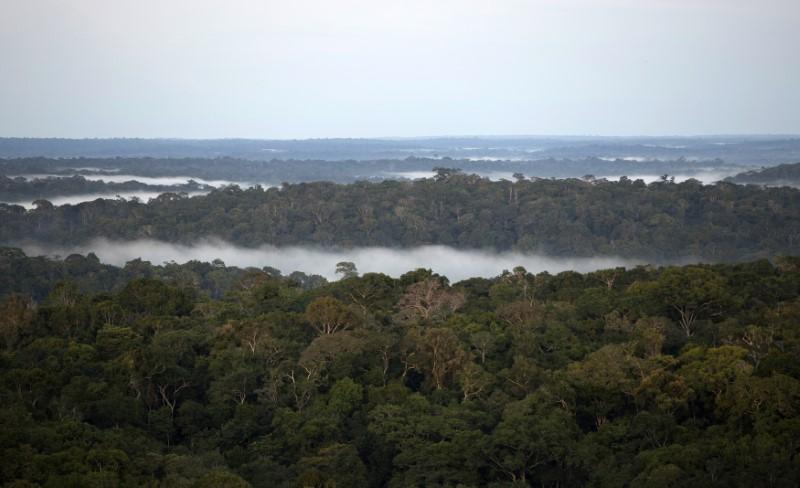 Brésil : la déforestation en Amazonie ralentit... mais pas suffisamment