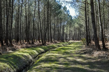 Forêt Médoc