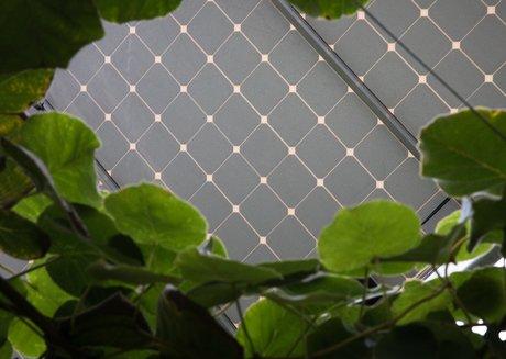 Reden Solar
