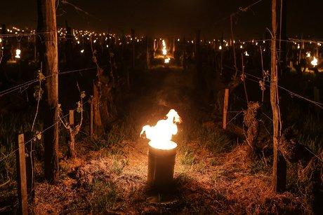 Braseros dans les vignes