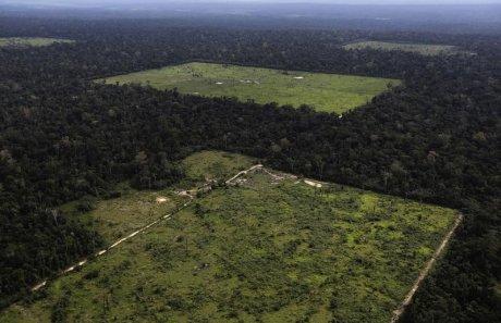 La déforestation en Amazonie a grimpé de près d'un tiers en un an
