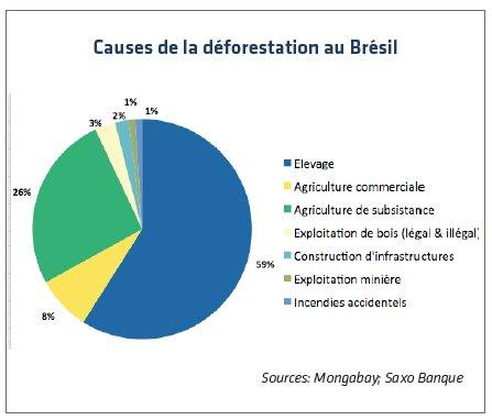 Cause de la déforestation au Brésil