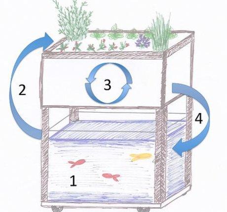aquaponie aquapouss