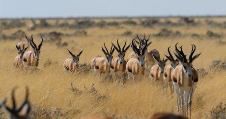Les 5 plus belles r serves d animaux d afrique - Images d animaux sauvages gratuites ...