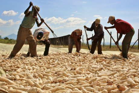 Afrique, agriculture, mécanisation, tracteur, paysan, rural, cultivateur, moisson, récolte, transport, agroalimentaire, Ethiopie,