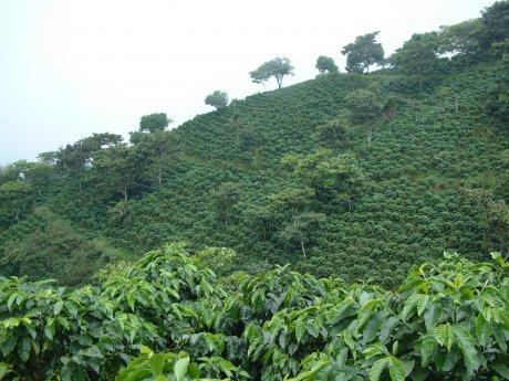 Plantation café